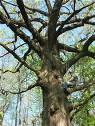 Tree Cimbing USA