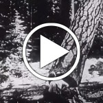 Forestry and Forest Industries 1946 Vocational Guidance Films